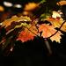 Album - Szarvasi Arborétum 2013 ősz