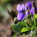Tavasz hírnök
