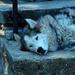 husky - pihi a melegben
