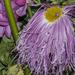 virágcsokor részlet