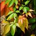 Ősz_levelek