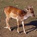 Bambi mosoly