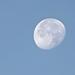 Reggeli Hold