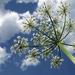növények_virágok