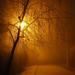 Egy ködös reggel