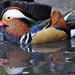 DSC1165 d90 mandarin réce oooo xxx