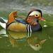 DSC3122 d90 mandarin réce