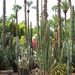 Kaktuszerdő