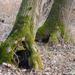 Fák tájak