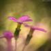 Virágfestmény
