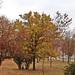 ősz 12