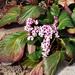 virágok 02