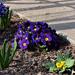 virágok 03