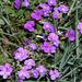 virágok 09