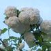 virágok 14