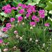 virágok 16