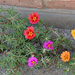 virágok 30