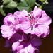 virágok 36