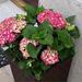 virágok 37