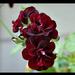 virágok 53