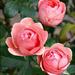 virágok 58