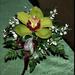 orchidea 23