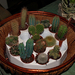 kaktusz óvoda