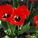 virágok 72