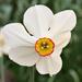 virágok 75