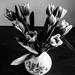 tulipán-ff