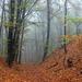 06 Novemberi erdő III.