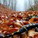09 Foltos szalamandra az úton
