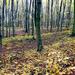 03 Novemberi erdő
