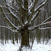 06 Tél a Medvesen