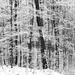 12 Zúzmarás erdő