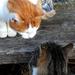 03 Barátkozó cicák