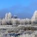 09 A Medves-fennsík zúzmarában