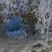 10 Fehér csipkés természet