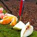 06 Tízórai gyümölcs a természet asztalán
