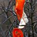 06 Narancsos bokor
