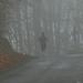 23 Ködös idő V.