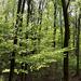 02 Zsendül az erdő