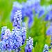 10 Tavasz virágai a kerékpárút mentén