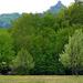 05 Erdőszél és Salgó