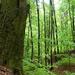 03 Veterán fák