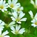 05 Fehérlő tavasz