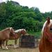 03 Erőteljes lovak