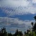 09 Borókás felhőkkel
