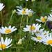 11 Virágmező