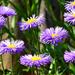 05 Lakótelepi virágok